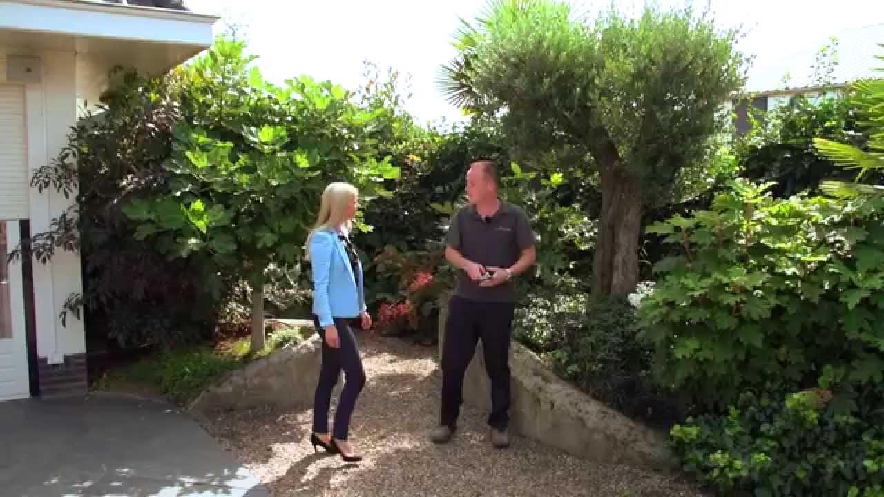 Olijfboom Specialist   Mediterrane bomen vertrouwd dichtbij   Bedrijfsfilm 2014   YouTube
