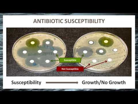 Antibiotic Resistance In Aquaculture
