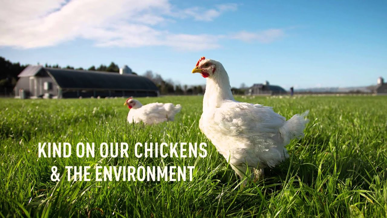 chicken range free The term 'free-range' is widely used to market and sell eggs and chicken yet the term is deceptive read our article to find our more about the reality of free range eggs and the reality for chickens.