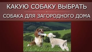 Какую собаку выбрать, ч 2 | Собака для загородного дома