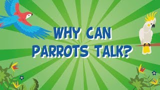 Why can Parrots Talk?   Educational Videos for Kids