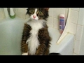 Funny reasons why YOU SHOULD HAVE A CAT -Funny CAT video