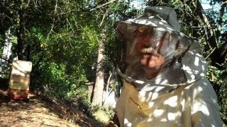 Backwards Beekeepers TV: The Honey Harvest