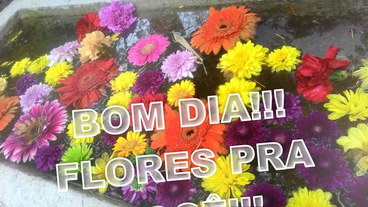 Bom Dia Amigos: BOM DIA AMIGOS QUERIDOS!