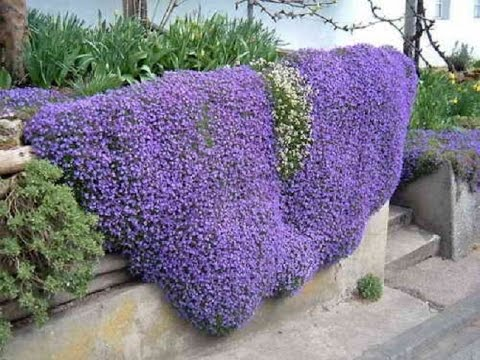 Купить многолетники, многолетние цветы для сада. Вы сможете создать клумбы из многолетников, подобрать растения для миксбордеров, клумб,