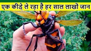 Top 10 deadliest insects on the planet | दुनिया के सबसे ज्यादा खतरनाक कीड़े