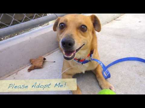 Adopt Beemers! Super Cute Dog That Plays A Great Game of Fetch!