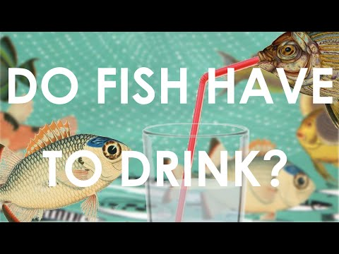 DO FISH HAVE TO DRINK? OSMOREGULATION AND OSMOSIS