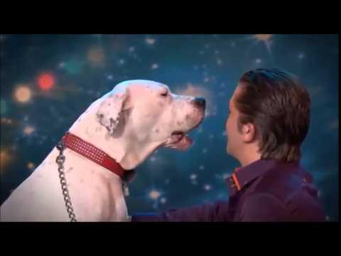 Xena, il cane che canta al Got Talent
