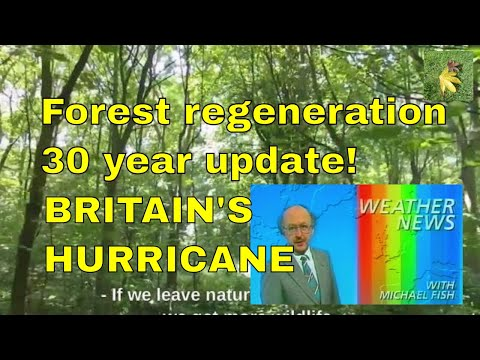 Rewilding trees forests and woodland. Rewilding trees (reforesting reforestation regeneration)