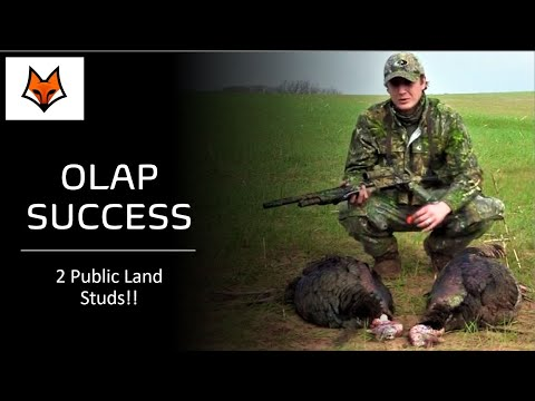 Public Land Turkey Hunting Oklahoma | OLAP