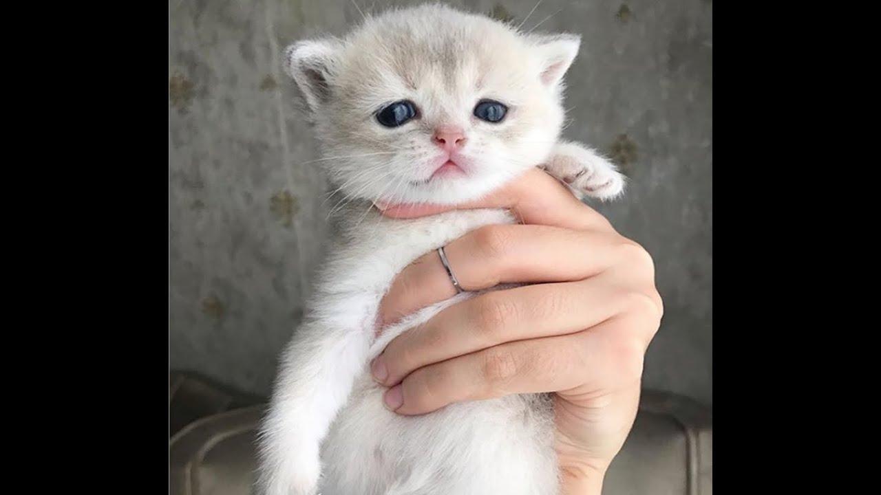 Katzenviedeos