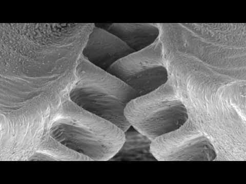 Mechanical gears in jumping insects
