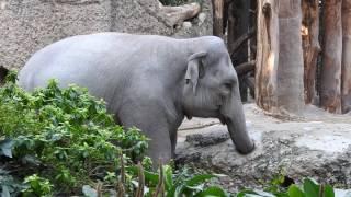 チューリッヒ動物園KAENG KRACHAN Elefantenpark(ケーン・クラチャン ...