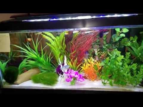 20 gallon long fish tank