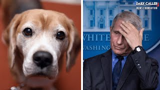 'Can't Have Mad Scientists Running Around': DeSantis Rails Against Fauci's Dog Experiments