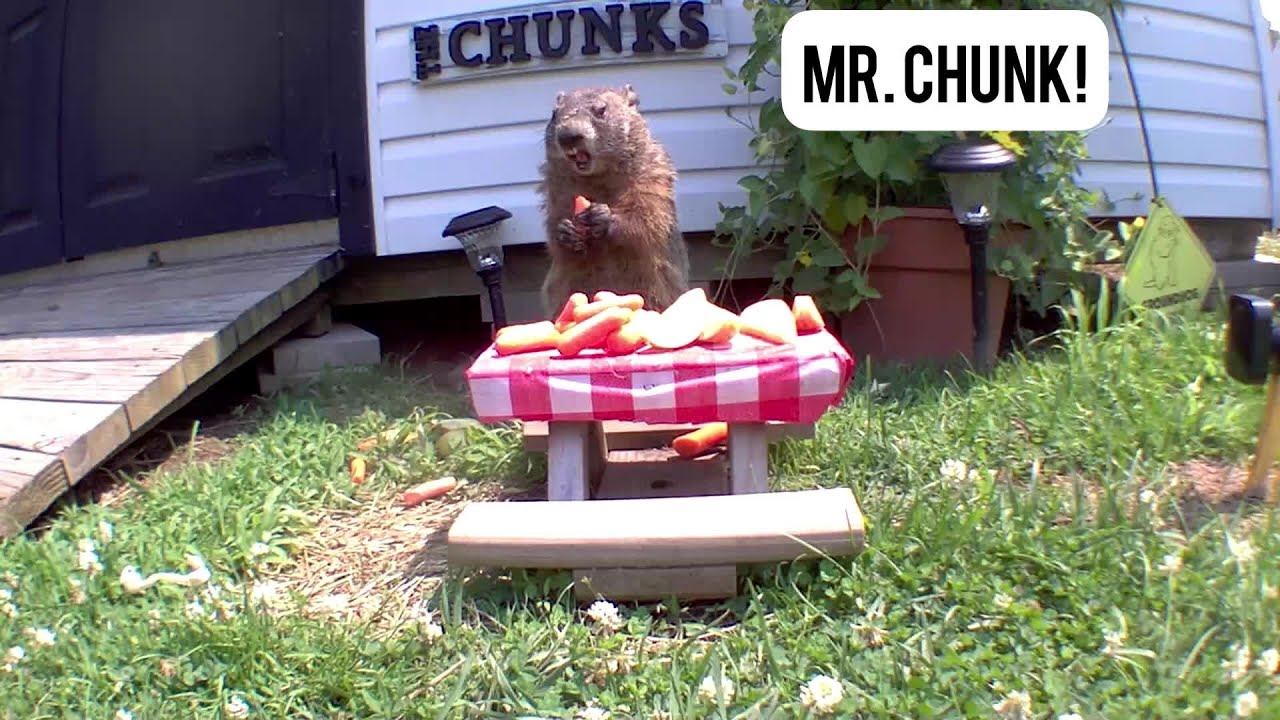 Mr. Chunk Returns!