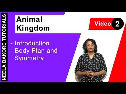 Animal Kingdom - Introduction - Body Plan And Symmetry
