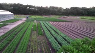 Wilson Farm
