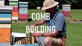 Comb Building