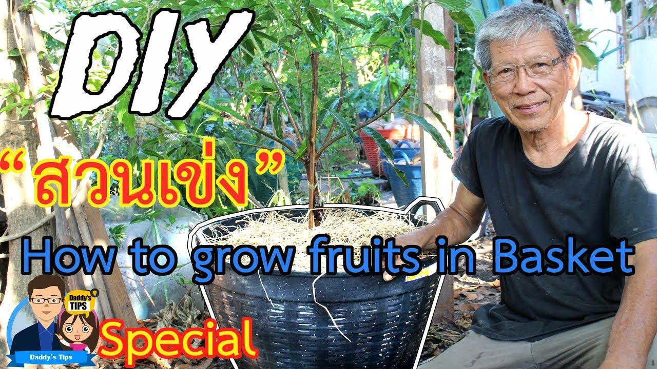 ตอนพิเศษ DIY ปลูกไม้ผลในเข่ง พื้นที่น้อยก็ปลูกผลไม้ได้ | How to grow fruits in basket -Daddy's Tip
