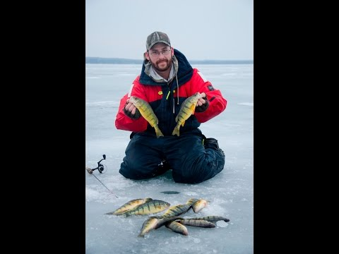 Ice Fishing Perch : Lake Couchiching