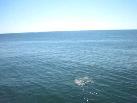 2011 shark new jersey beach shore fishing pier youtube for Jersey shore fishing