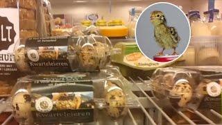 スーパーマーケットで買った12個入りのうずらの卵、温めてみたらヒナが1羽生まれたよ!(オランダ)