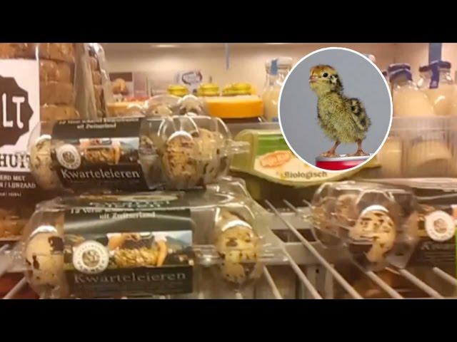 Supermarket Egg Hatches After Man Incubates Box