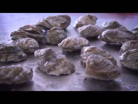 Middle Bay/Tangier Island: Virginia's 8th Oyster Region