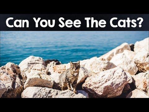 optical illusions find cat # 75