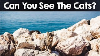 Nobody Can See All The Hidden Animals । Optical Illusions । Brain Teasers [#3]