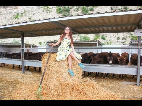 Ослики на агроферме | Кипр