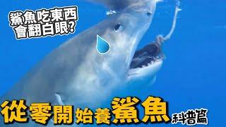 【從零開始養】鯊魚(科普篇)!原來可以飼養?吃人怕人?【許伯簡芝】