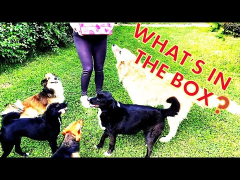 Surprising my dogs with a beautiful cat / Cat has a Shocking Face 🎁🎁🎁