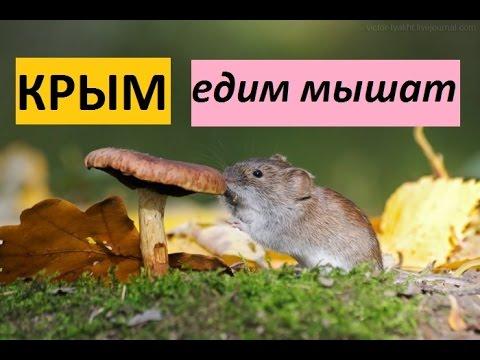 Крым. Рецепт салата из мышей. Суровая зима 2016-2017. thumbnail