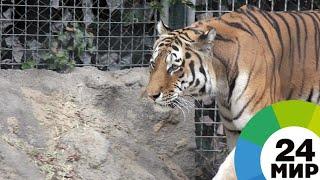 Как Шерхан и Балу: в Индии тигр и медведь устроили жесткую схватку - МИР 24