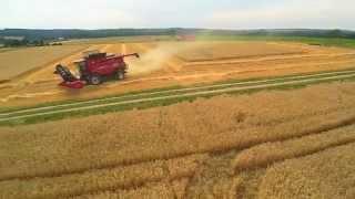 case ih 8230 harvesting