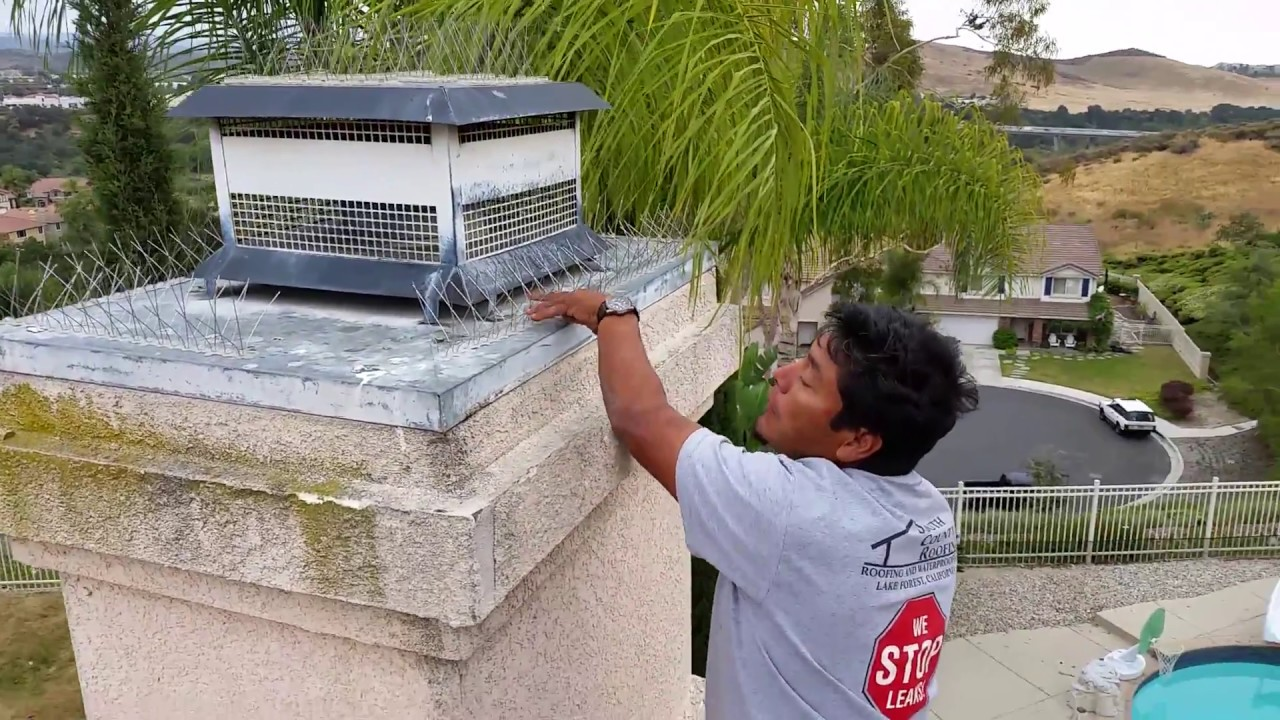 Bird Spike Installation Keep Birds Of Your Roof Or