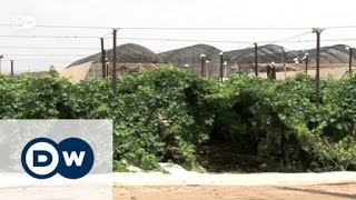 Landwirtschaft in der Wüste | Projekt Zukunft