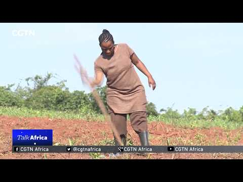 Talk Africa: Modernizing Africa's agriculture