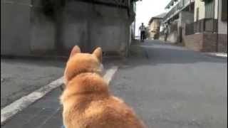 散歩中、ストを起こした飼い犬(雌)です。イヌの目線で見るとこう見え...