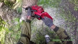 видео Удаление старых и сухих деревьев