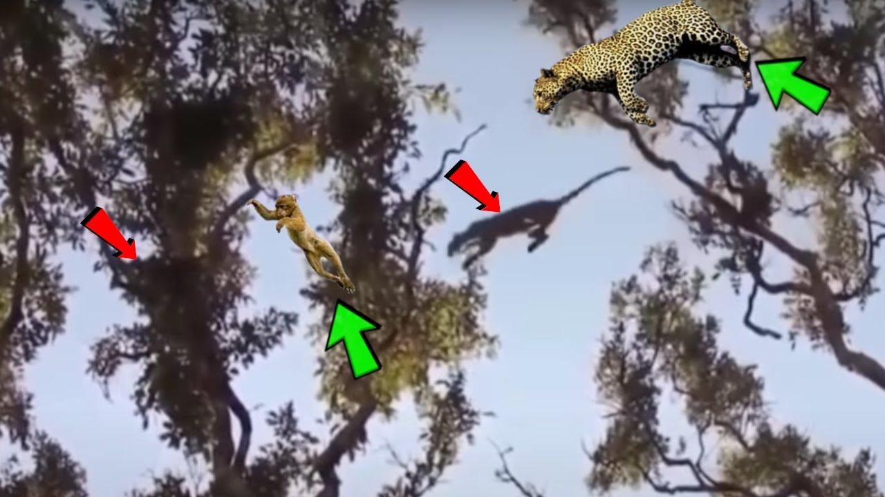 EL IMPRESIONANTE LEOPARDO,el FÉLIDO Mas Exitoso del Planeta (Incredible SKILLED Leopard)