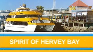 Spirit of Hervey Bay 2015 Trip 3 Whale Watching