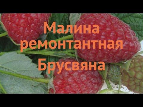 Малина ремонтантная Брусвяна (rubus idaeus brusvyana) 🌿 обзор: как сажать, саженцы малины Брусвяна