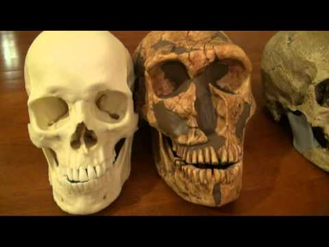 comparison of modern human, cro-magnon and neanderthal - part 1, Skeleton