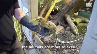 Repeat youtube video Animal Handling Gloves - Safety and Protection