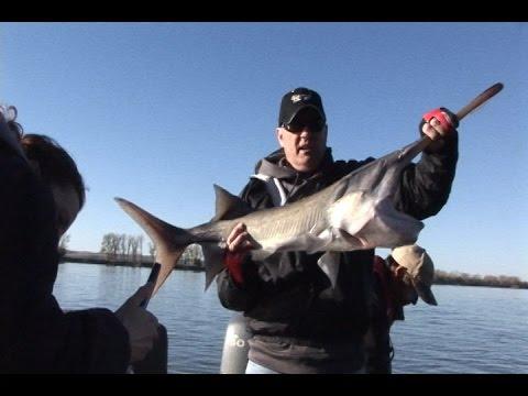 Missouri River Paddlefish Snagging