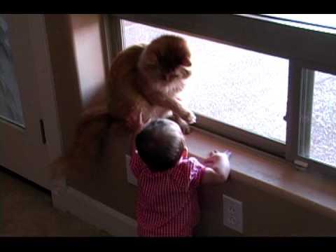 Baby + Cat = Funny